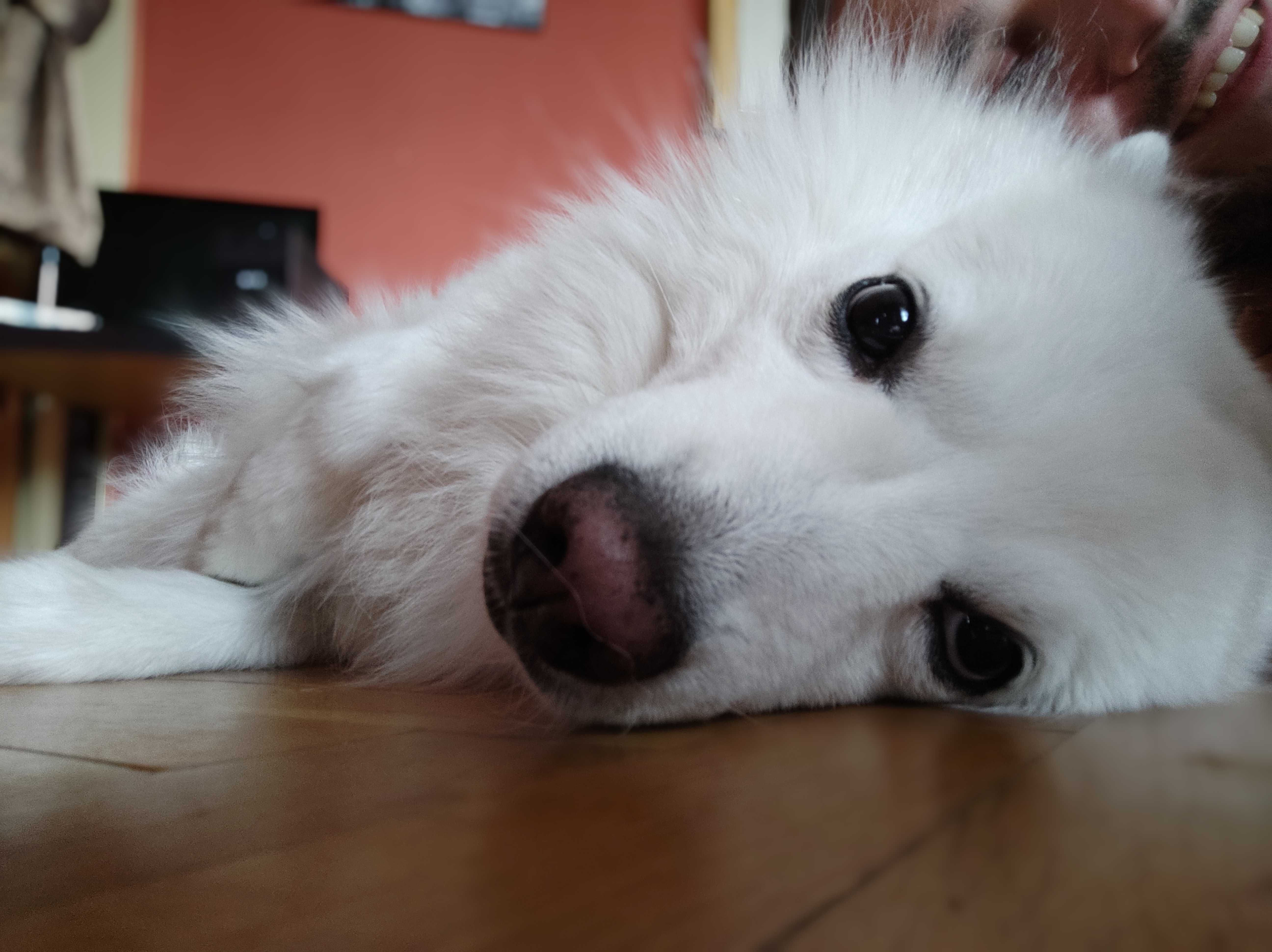 Picture of a white dog